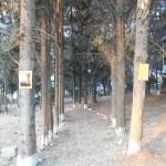 foto_kat13pe3_800x600